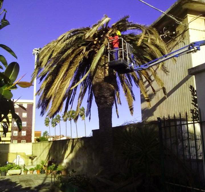 Abbattimento palme punteruolo rosso Sardegna